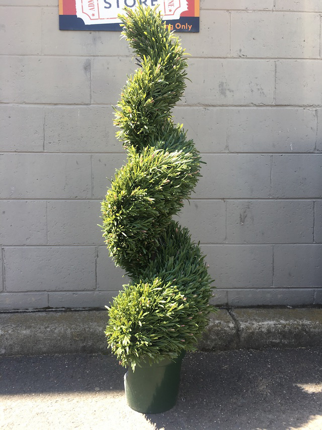 GRE0069 GREENERY, Topiary - Rosemary Spiral - 150cm H $93.75
