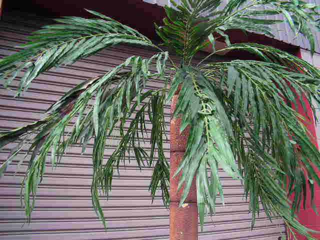 PAL0004 PALM TREE, 2.4m or 3m High Freestanding - Styrene $100