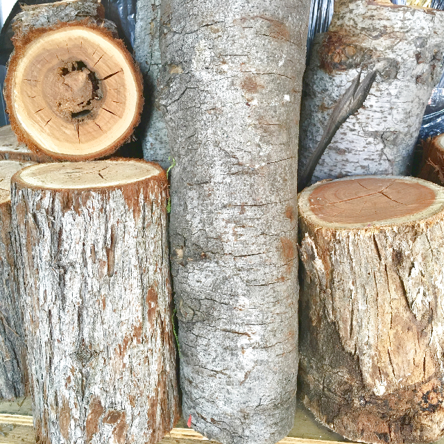 LOG0001 LOG, Timber (Real) $6.25