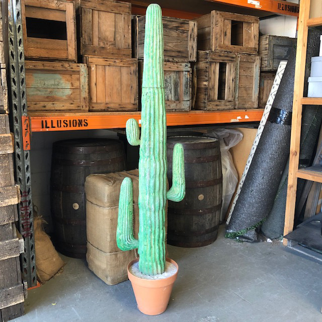 CAC0012 CACTUS, 1.7m High - Green in Terracotta Pot $65