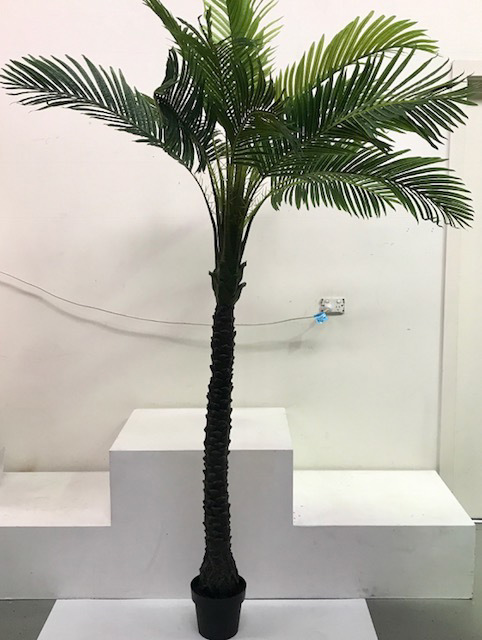 PAL0012 PALM TREE, Realistic in Black Pot 1.5m W x 2.6m H  $100
