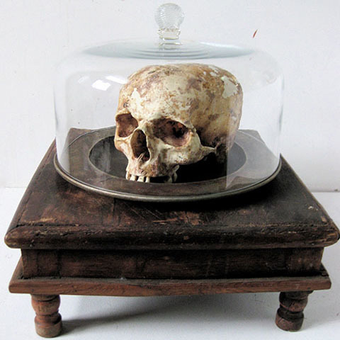 Skull under Glass Cloche