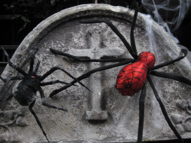 SPIDERS, Redback (30cm) or Hairy (15cm) $5 each