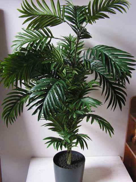 GRE0004 GREENERY, 1.1m H Palm (Realistic) - Potted $30