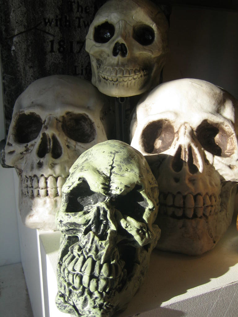 Assortment of Skulls