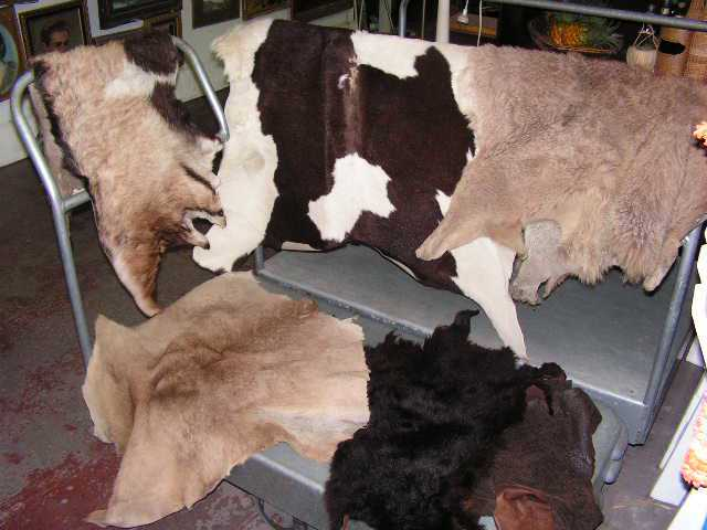ANI0001 ANIMAL HIDE, Assorted $20