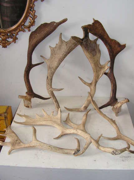 ANT0002 ANTLER, Deer Antler - Real (Price is Per Antler) $11.25
