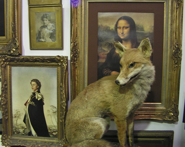 Fox - taxidermied