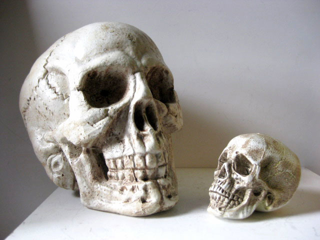 Skulls, large 40cm and lifesize