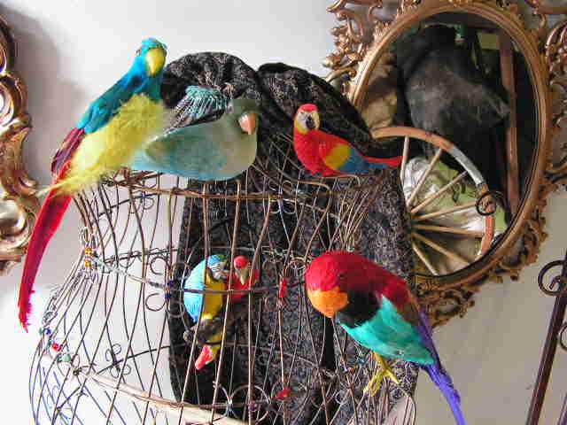 Parrots on a Cage