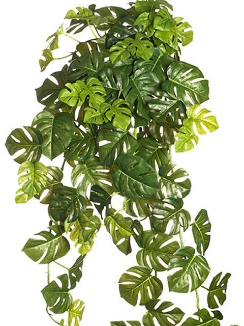 GRE0056 GREENERY, Foliage - Split Philo Hanging Bush $5.50