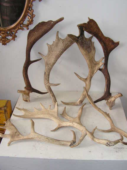 ANT0002 ANTLER, Real (Price is Per Antler) $11.25