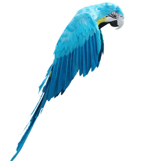 BIR0013 BIRD, Parrot Blue Feathers 50cm $10