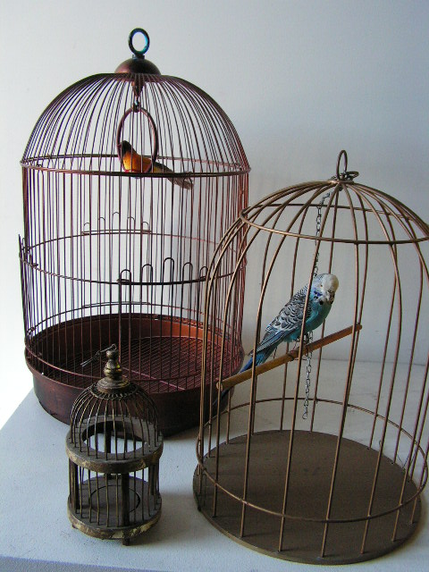 Collection of Cages with Bird