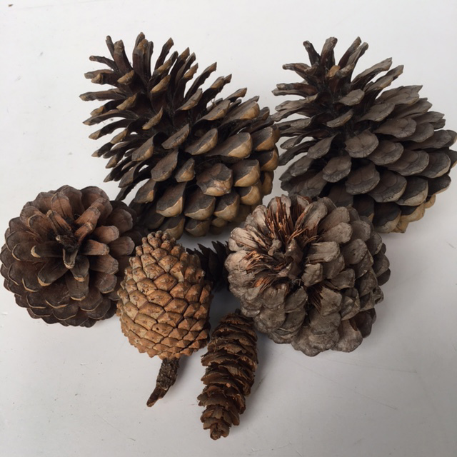PIN0001 PINE CONE, Assorted $0.50