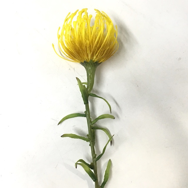 FLO0113 FLOWER, Curly Leucospermum - Yellow $2