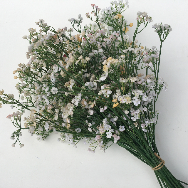 FLO0067 FLOWER, Baby's Breath $0.75