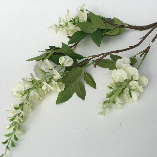 FLO0104 FLOWER, Wisteria - White $2