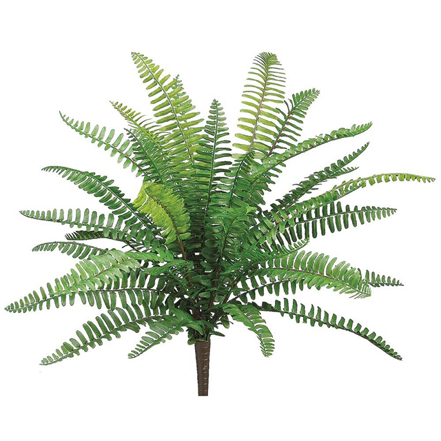 GRE0043 GREENERY, Boston Fern 45cm $6.25