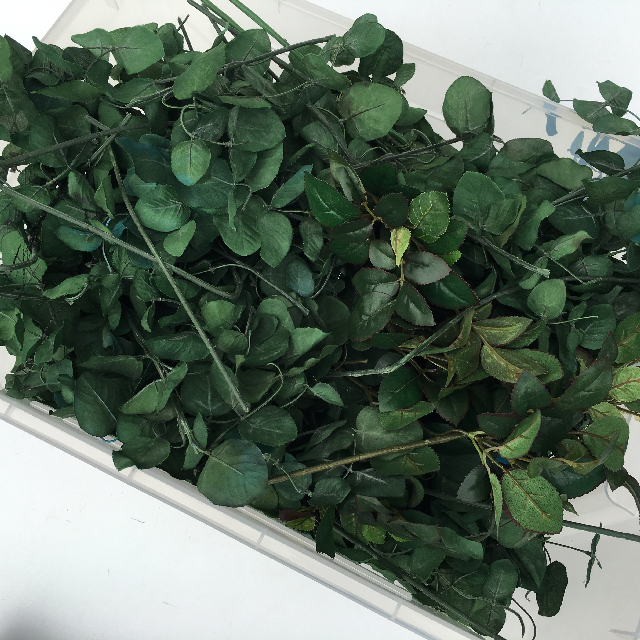 GRE0019 GREENERY, Box of Foliage Stems $20