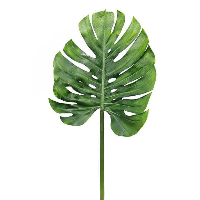 GRE0055 GREENERY, Foliage - Monsteria Leaf 102cm $3.75