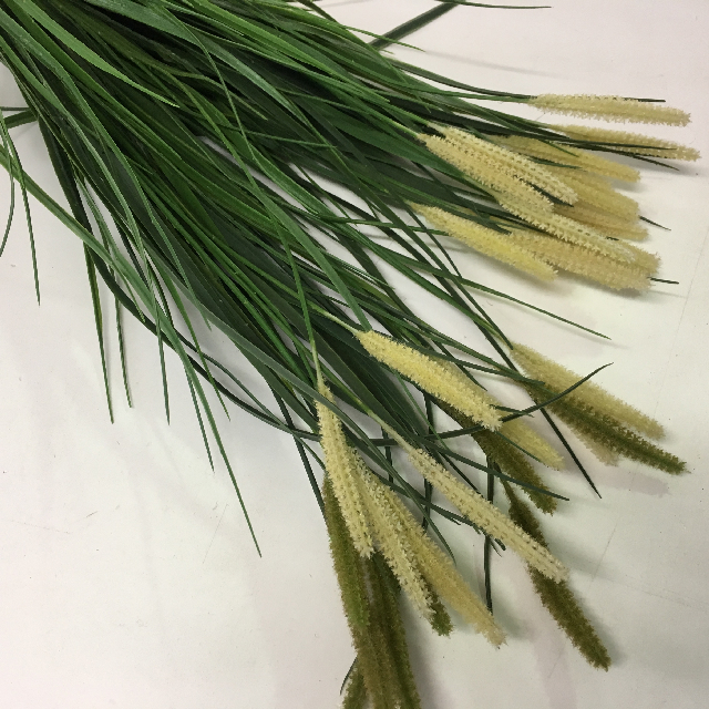 GRA0022 GRASS, Bullrush Green Cream $2