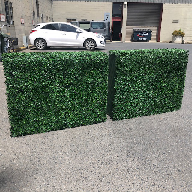 GRE0063 GREENERY, Box Hedge 100cm W x 80cm H $75