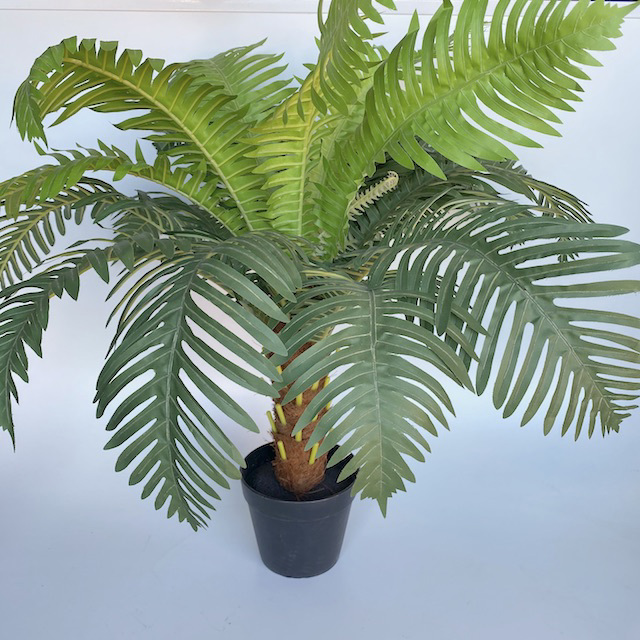 FER0001 FERN, Realistic in Black Pot 60cm H $18.75