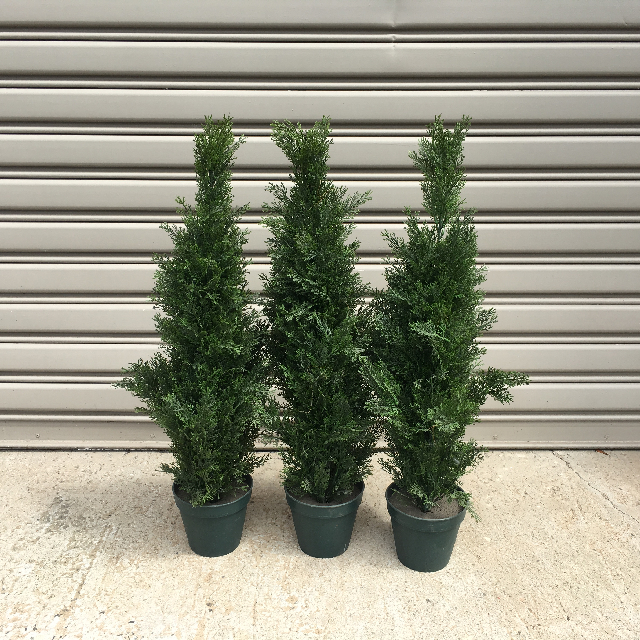 GRE0049 GREENERY, Conifer 80 - 90cm H (Realistic) - Potted $25