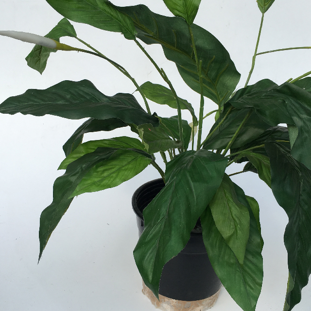GRE0005 GREENERY, Small Peace Lily (Realistic) - Potted $6.25