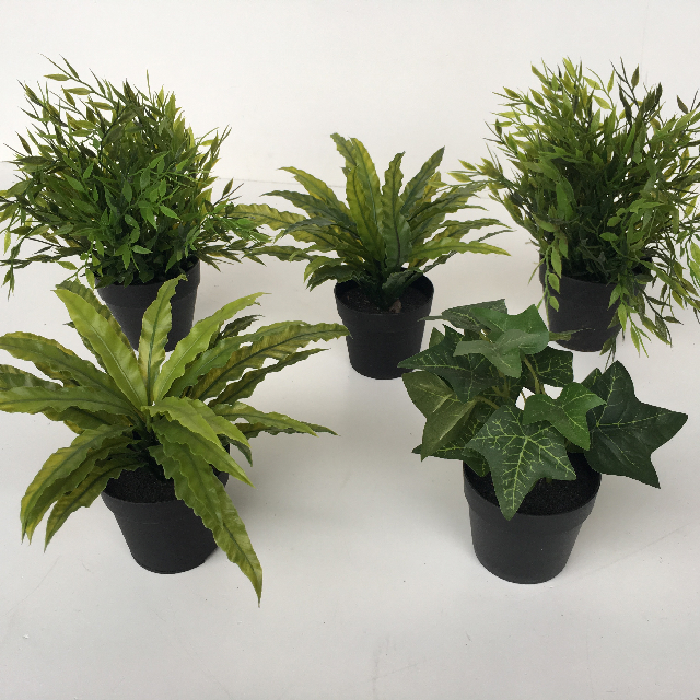 GRE0038 GREENERY, Potted Plant Ex Small Assorted $3.75