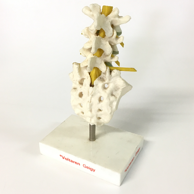 MOD0011 MODEL, Anatomy - Spine (Small 18cm H) $10